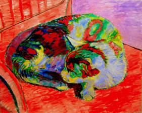 Colored cat