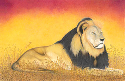 African Lion (Cecil)