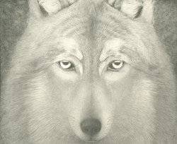 Grey Wolf head