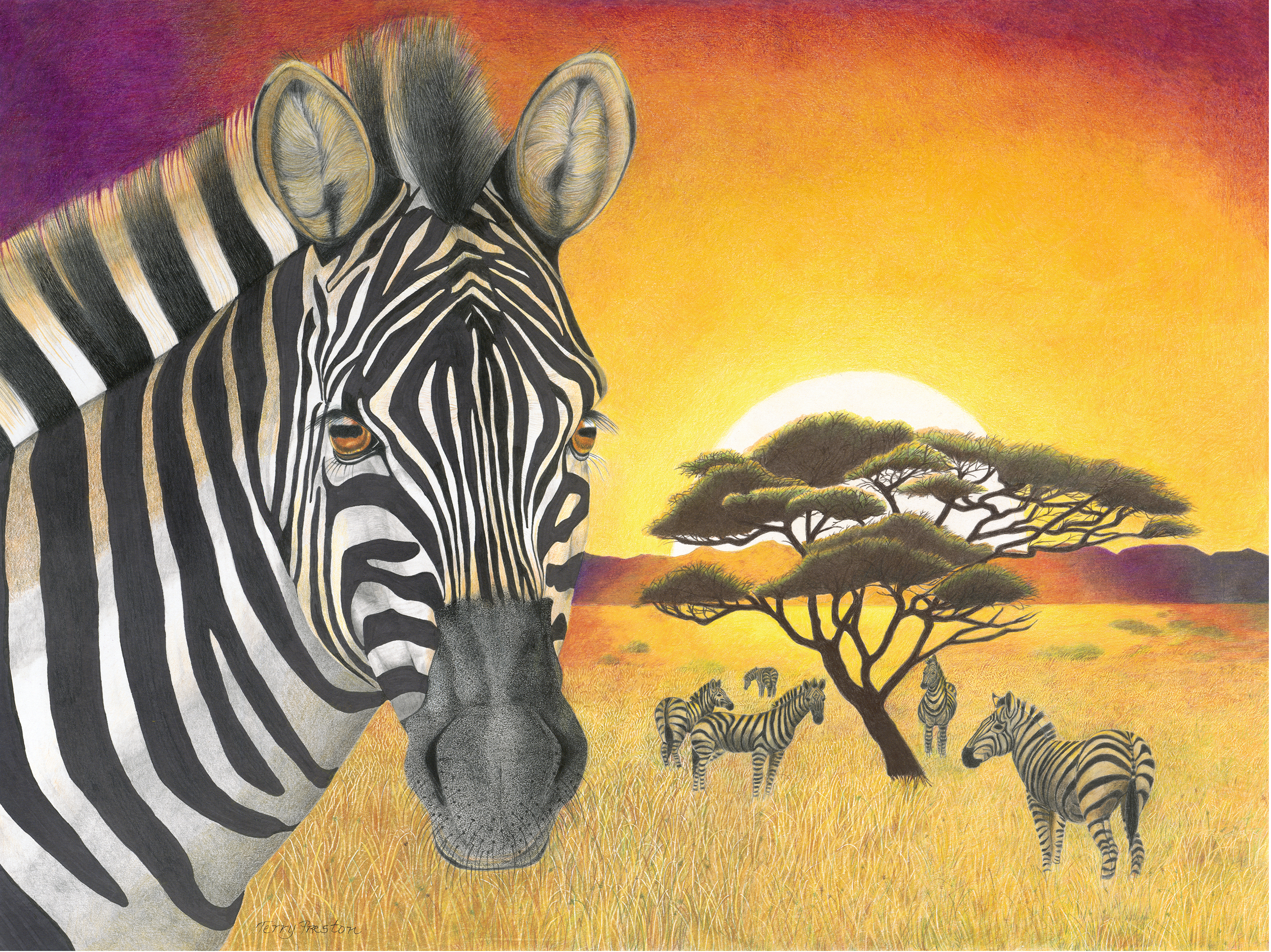 Plains Zebra (small herd)