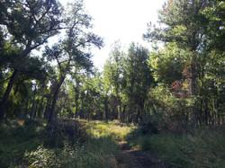 Sundance Trail