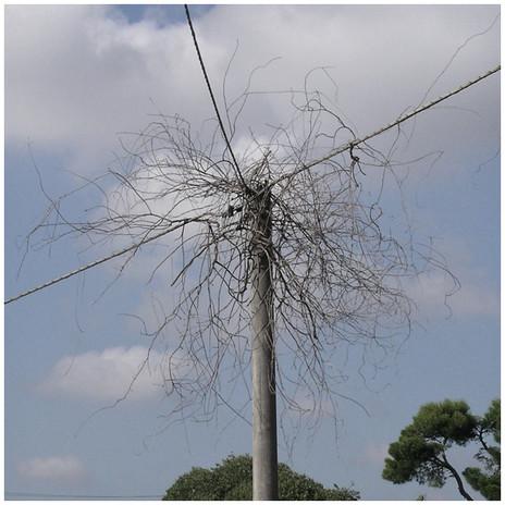Tree #49 (Blackout), 2014