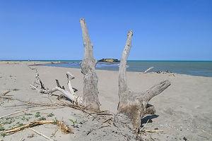 Oasi del Simeto, Mediterraneo, Riserva Naturale Italiana, Paesaggio, Ambiente. © Giusanna Di Stefano