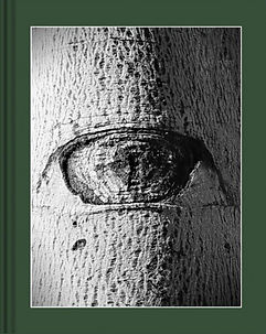 Cover_Book_NOI ALBERI