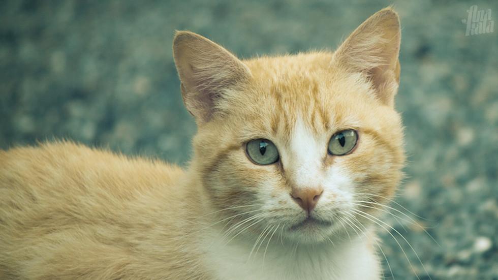 street cat_0847_anakala
