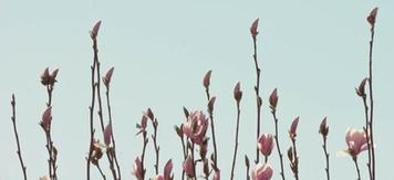 magnolia_anakala_2829
