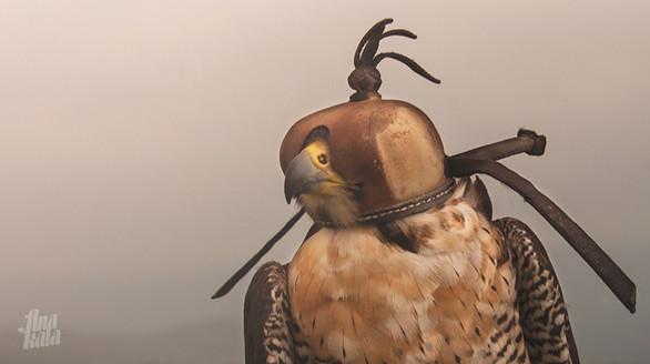 falcons galicia-III_4418_anakala