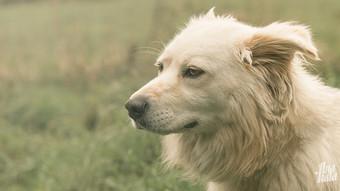 white dog_anakala