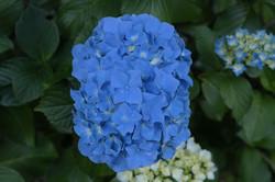 Imagen primavera en Ralun