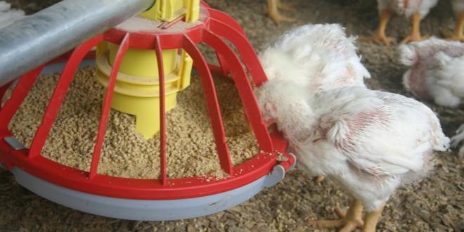 poultryfarming.co_.za_.jpg