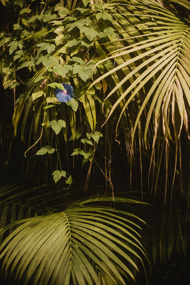 A trumping purple flower is tucked between palm fronds and vines as it reaches for light in the Eden Project's Rainforest Biome.  Wanderlost Magazine | Mary Kathryn Carpenter
