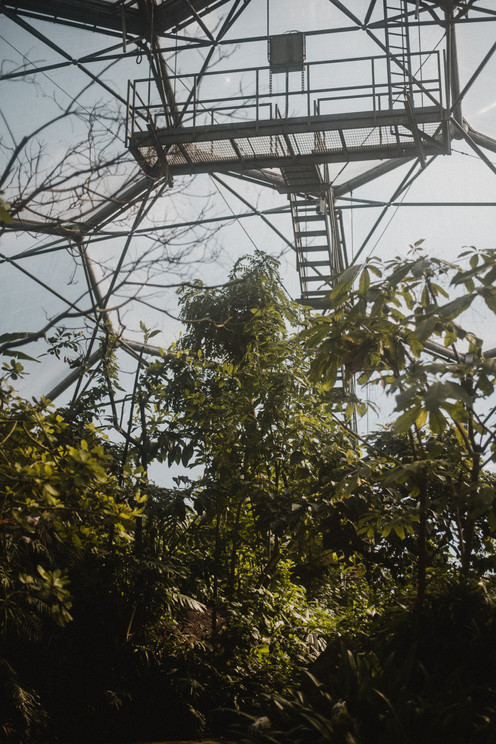 The Rainforest Biome at the Eden Project in Cornwall appears to be a rainforest reclaiming modern luxuries, including the viewing platform used to observe the entire Biome.  Wanderlost Magazine | Mary Kathryn Carpenter