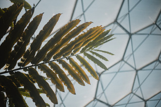 A plant reaches for the sun the peeks through the Eden Project's Rainforest Biome's transparent ceiling.  Wanderlost Magazine   Mary Kathryn Carpenter