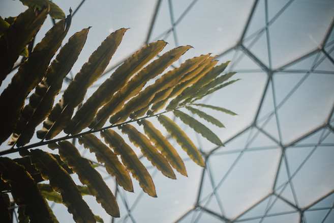 A plant reaches for the sun the peeks through the Eden Project's Rainforest Biome's transparent ceiling.  Wanderlost Magazine | Mary Kathryn Carpenter
