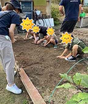 食育 はくさい種植え
