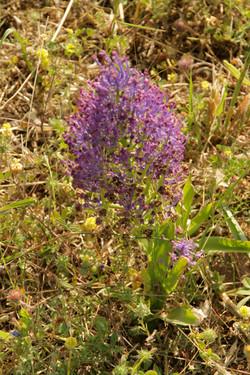Ierokipio-Flower