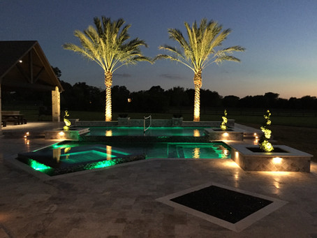 Gorgeous Medjools installed behind a pool