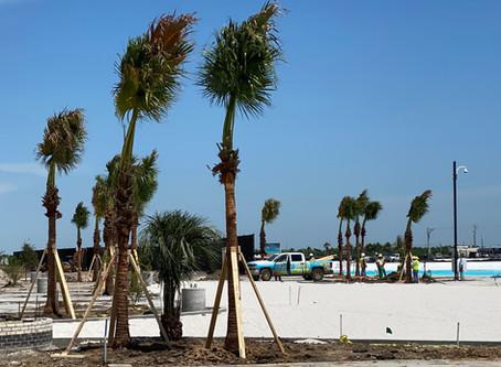 Verdant wins 240 Palm tree install job