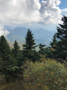 AT Pine Tree Vista.jpg