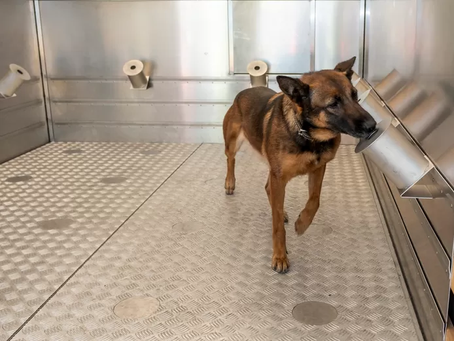 Drug dog Leentje checks 10 containers in 10 seconds with help from OCD Sample kit.