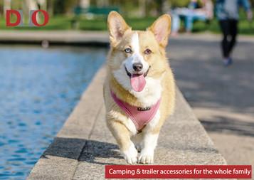 Dog image 2.jpg