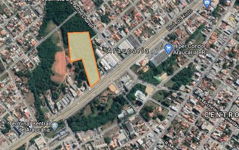 6 - Araucaria.jpg