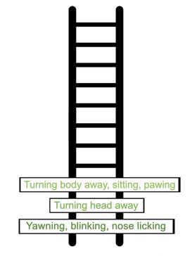 Step 14.jpg