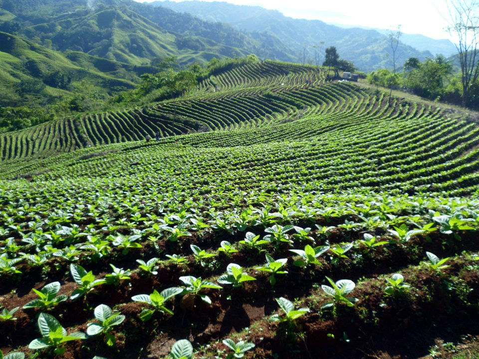 Tabacos de la Cordillera