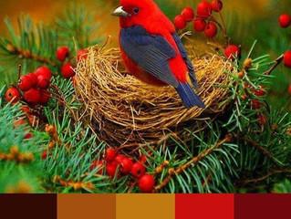Pontos de Crochê - #02 - Gráfico e combinação de cores