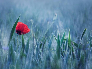 Inspiração de Cores - Flores