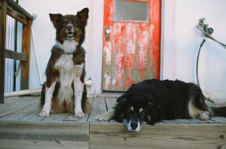 Sadie and Wolfgang