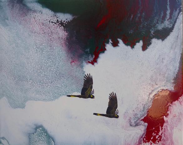 Black cockatoos