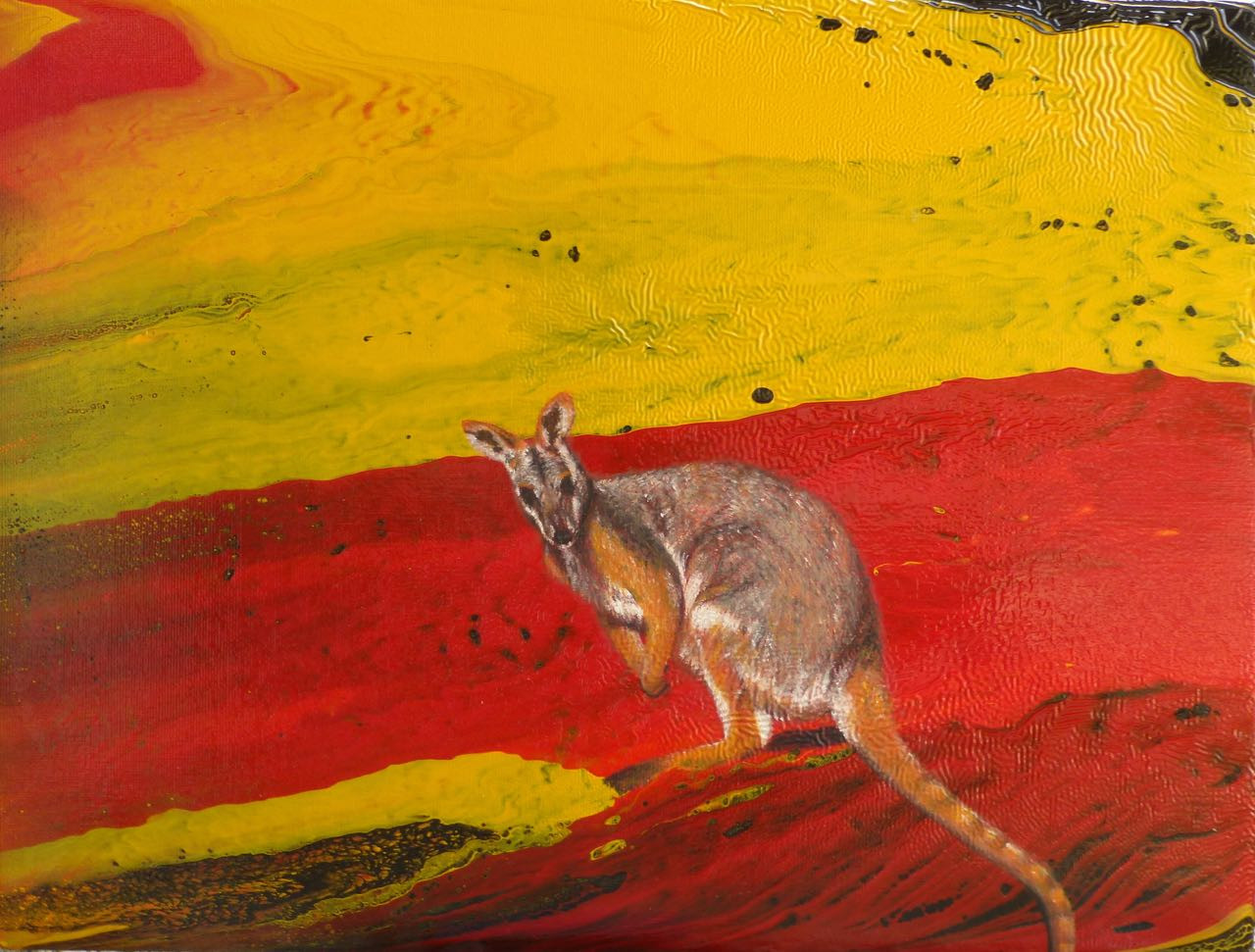 Black flanked rock wallaby