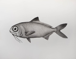 beardfish angie marchinkow artist