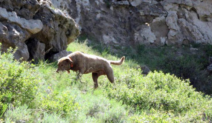 Amigo en conservación de Argentina