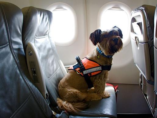 Tenencia responsable: si tu mascota no está inscrita no podrá salir del país