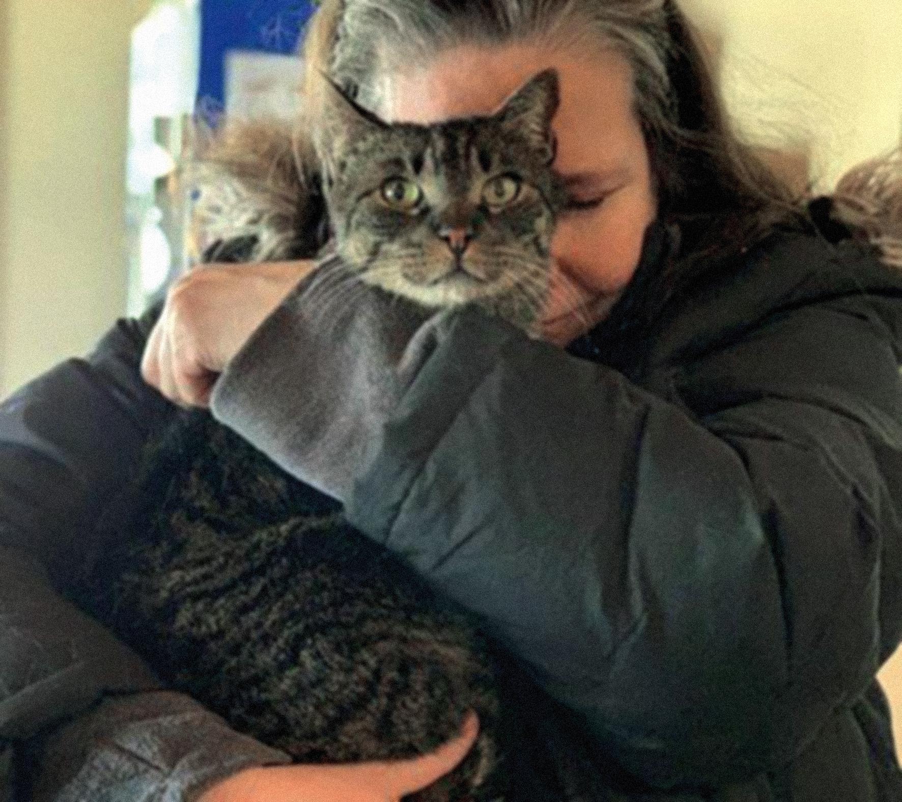 Gato regresa a su hogar tras 5 años