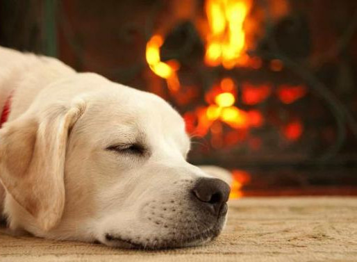 Calefacción: ¿Afecta a las mascotas?