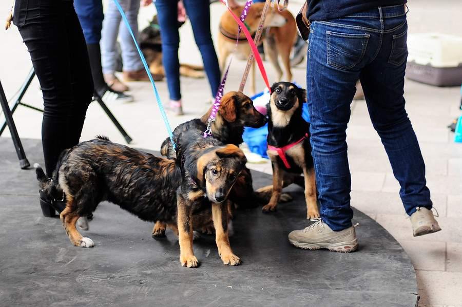 Registro nacional de mascotas