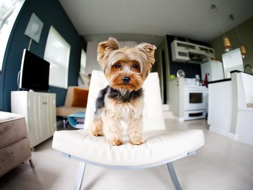 Un derecho: Pronto  sí podrás tener mascotas en tu departamento por ley