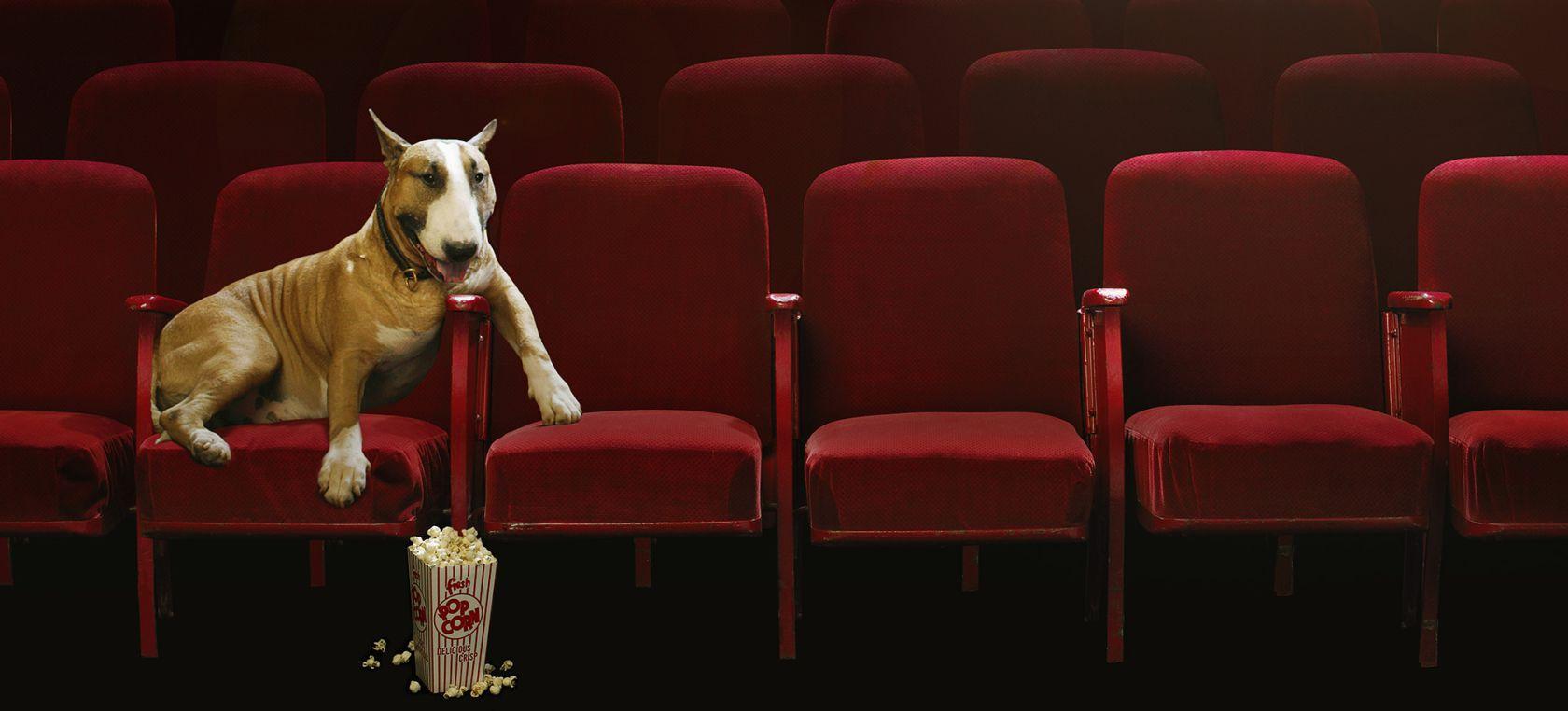 Cine donde perros son bienvenidos
