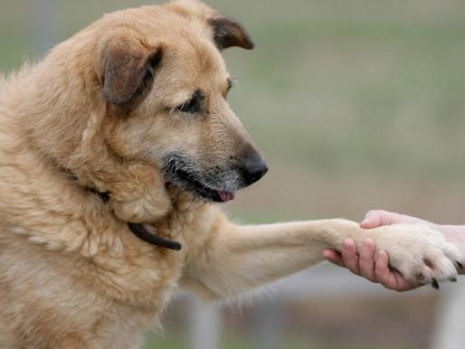 5 tips para cuidar la vejez de tu mascota