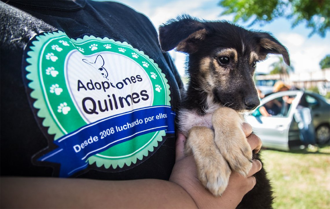 Quilmes: nuevo programa de adopción