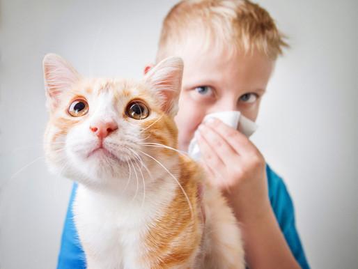 ¿Tiene relación el pelo del gato con la alergia?