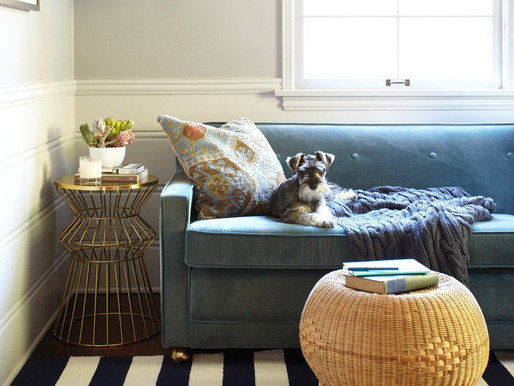 Mudarse con una mascota: 5 consejos indispensables