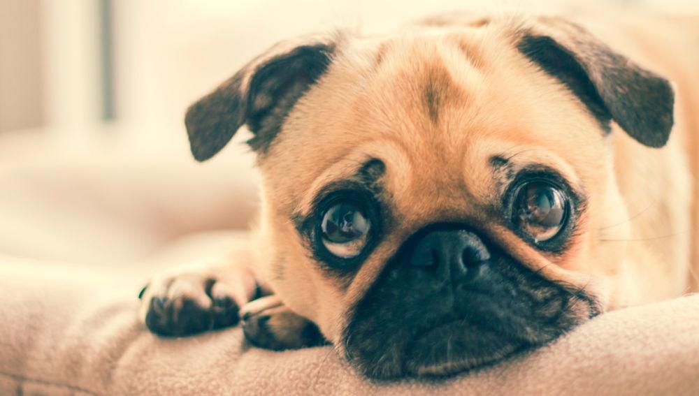 Cerca de 140.000 mascotas abandonada