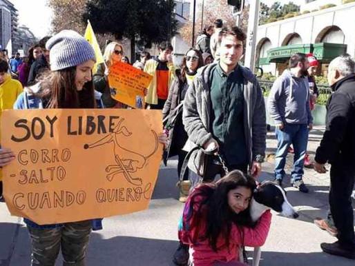 El día decisivo para las carreras de perros en Chile: Hoy se legisla