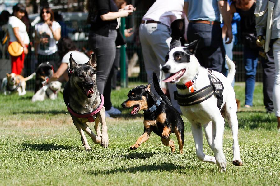 Nueva zona recreativa canina