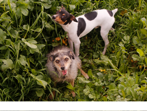 5 pasos para sacarle las mejores fotos a tus mascotas
