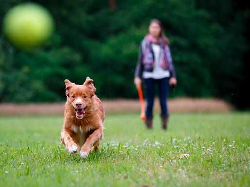 ¿Cómo incentivar la mente de tu mascota?